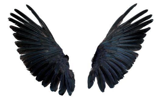 Foto de Wings Isolada No Branco e mais fotos de stock de Abrir em Leque