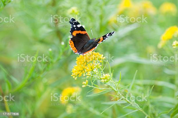 Photo of Wings of a Red Admiral