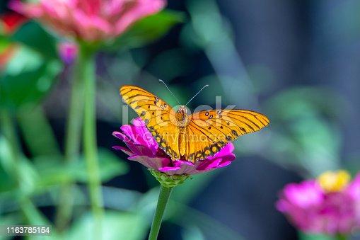 538988558 istock photo Wings of Change 1163785154