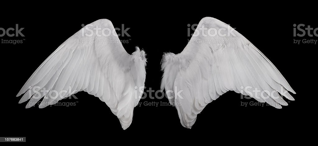 Wings on black background stock photo