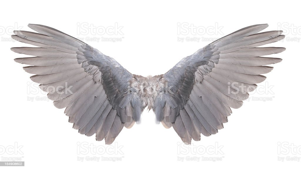 Wings on white background royalty-free stock photo