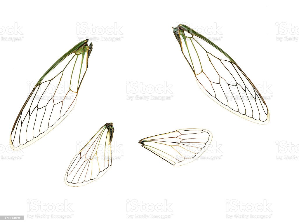 Wings (100% View) royalty-free stock photo