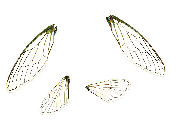 wings (100% view) - detachment stock pictures, royalty-free photos & images