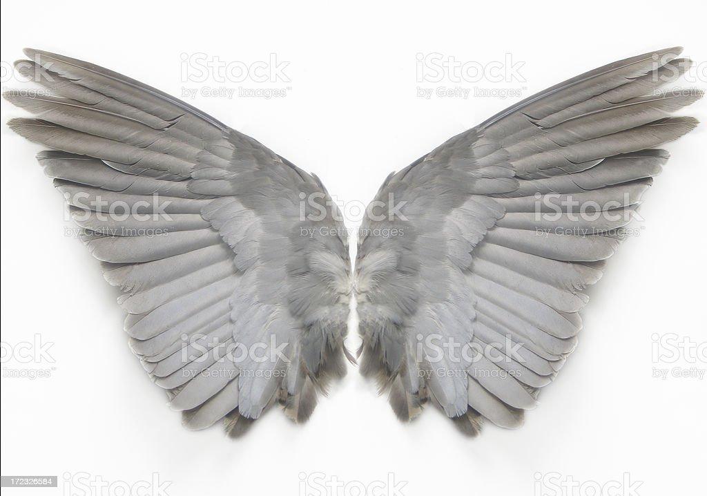 Wings - foto de stock