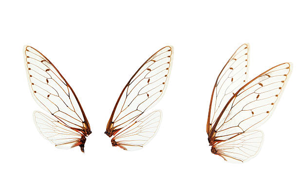 wings insect wings on white background fly insect stock pictures, royalty-free photos & images