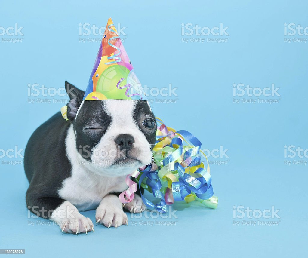 Guiñar el ojo cumpleaños cachorro. - foto de stock