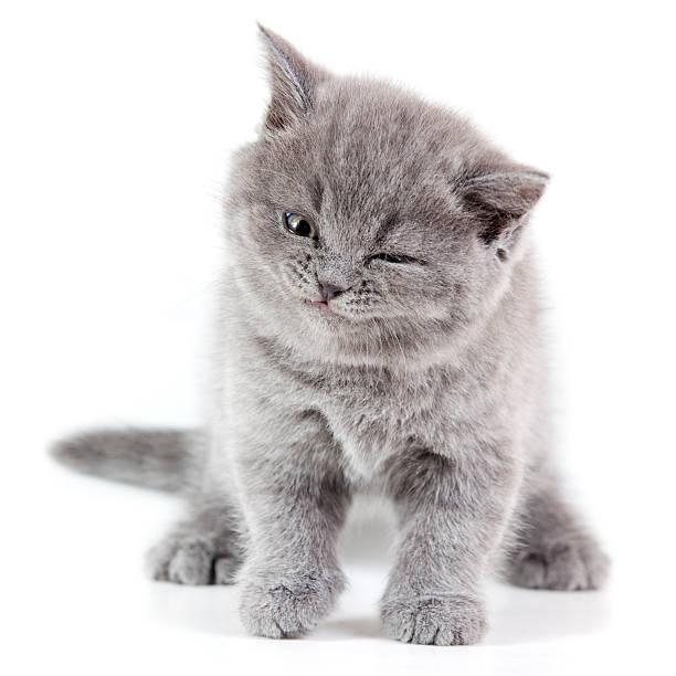 Winking kitten picture id185327194?b=1&k=6&m=185327194&s=612x612&w=0&h=keld7yhz2nl9r4cnn vkuju2sx4wxqxzbbokrbjnedq=