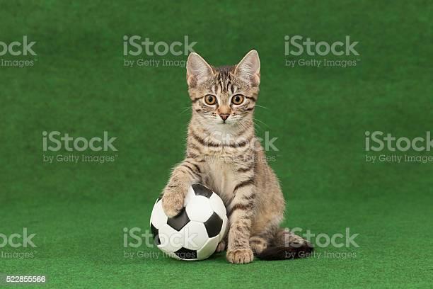 Winner cat picture id522855566?b=1&k=6&m=522855566&s=612x612&h=fy4modbrjysaq9jb6w0tg 8 3gxp8usysqf2ykoonrc=