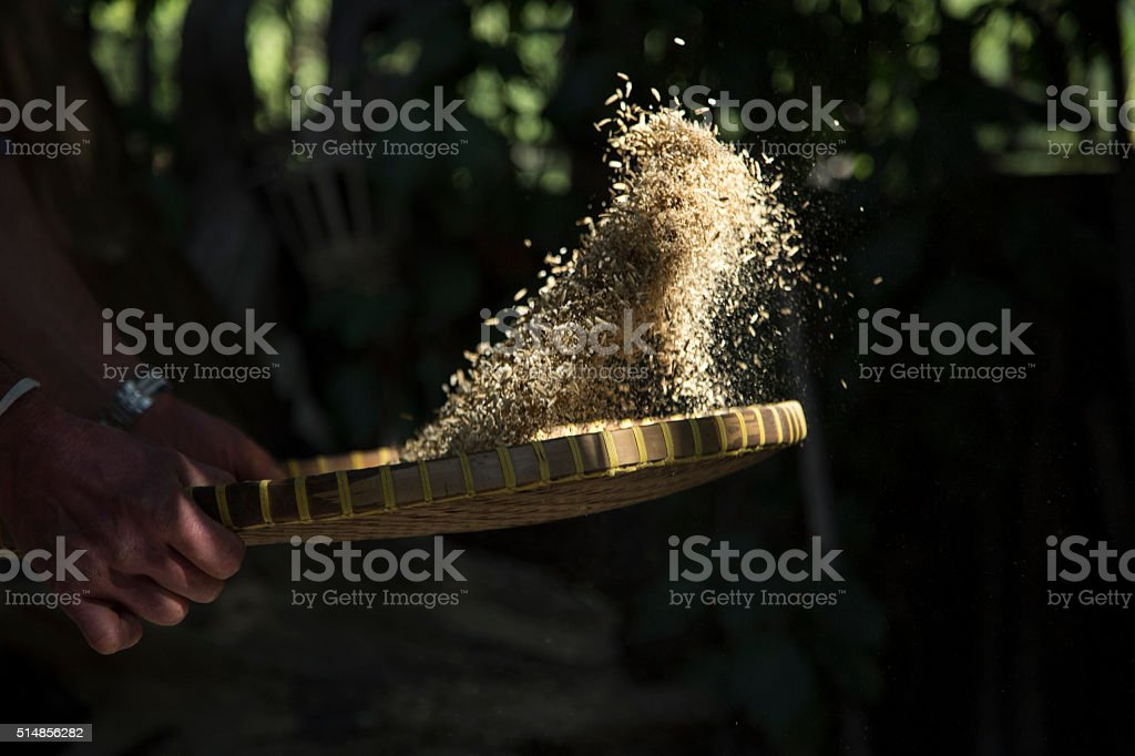 Winnowing rice from husk stock photo