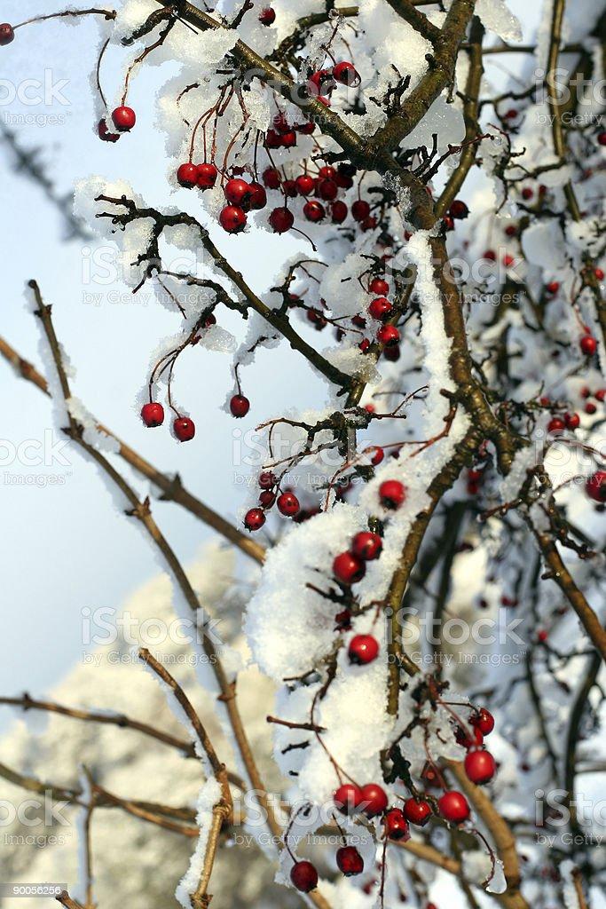 winter 4 royalty-free stock photo