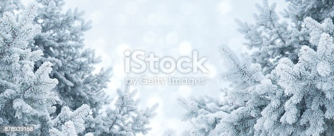 Winter abstract background. Christmas landscape with pine branches in frost