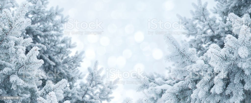 Winter abstract background. Christmas landscape with pine branches in frost stock photo