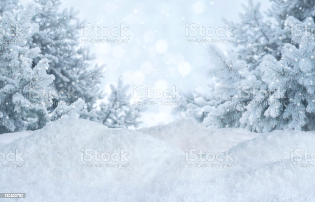 Winter abstract blurred background. Frosty landscape with pines and snowdrifts stock photo