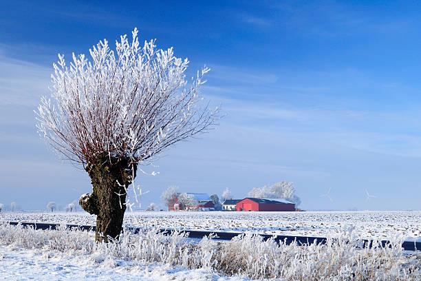winter agricultural landscape with snow and blue sky - skåne bildbanksfoton och bilder