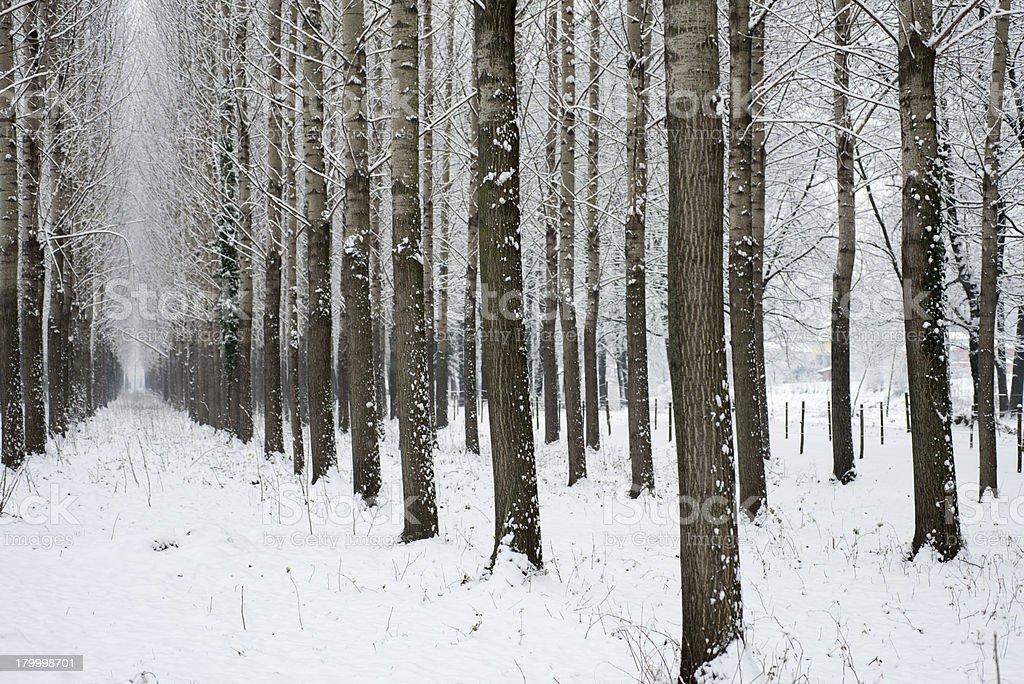 겨울맞이 골목 royalty-free 스톡 사진