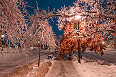 Winter alley and street lights in the night city with ice on frozen trees branches in Toronto