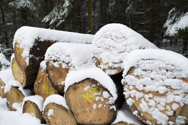 Winter and snow in Germany Tree trunks in the snow duitsland stock pictures, royalty-free photos & images