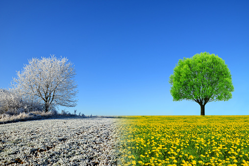 Winter and spring landscape with blue sky.