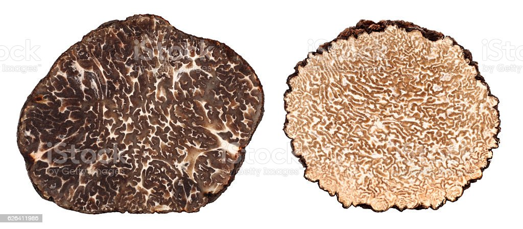 Winter and summer black truffle cross section difference stock photo