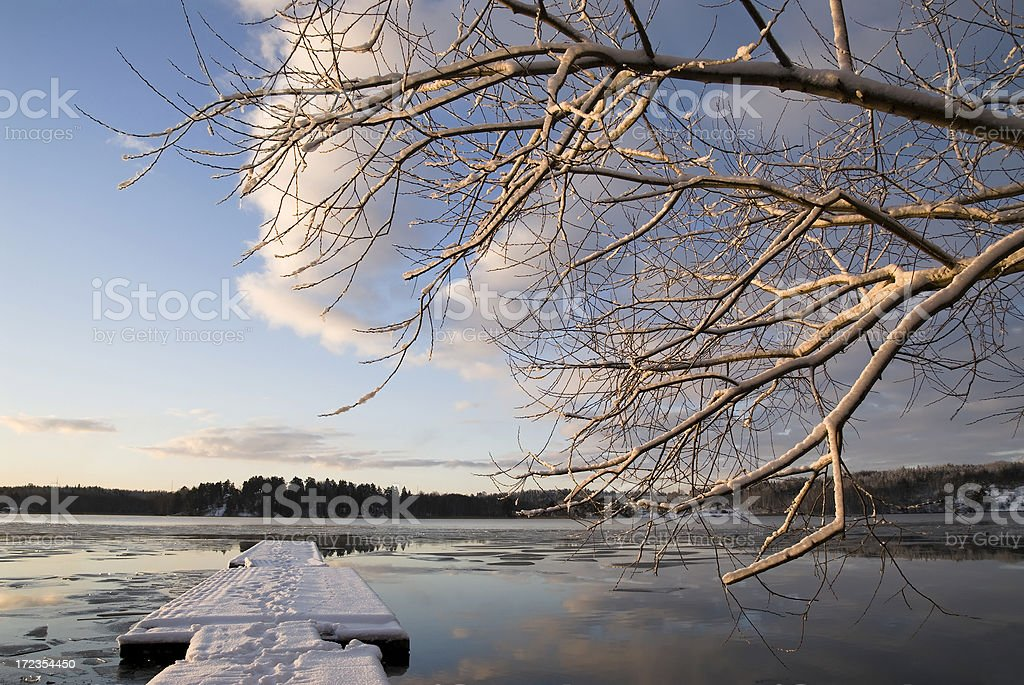 Winter and trees royalty-free stock photo