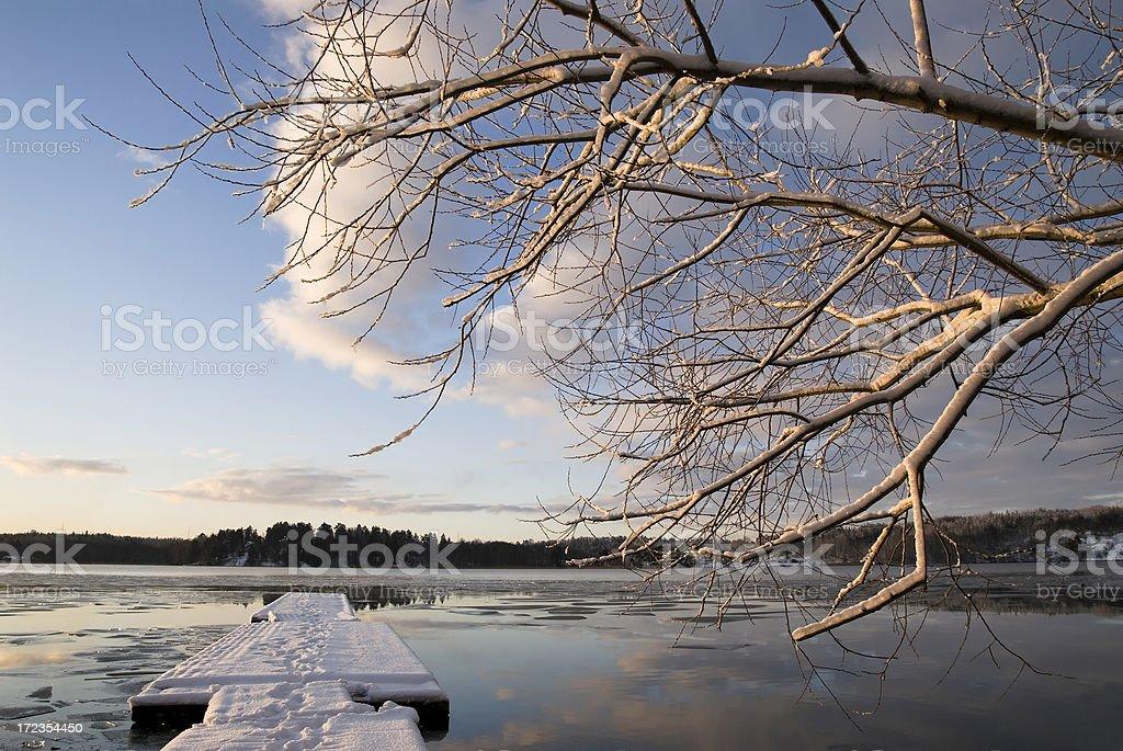 Árboles de invierno y foto de stock libre de derechos