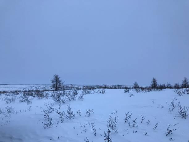 冬の北極ツンドラ - ツンドラ ストックフォトと画像