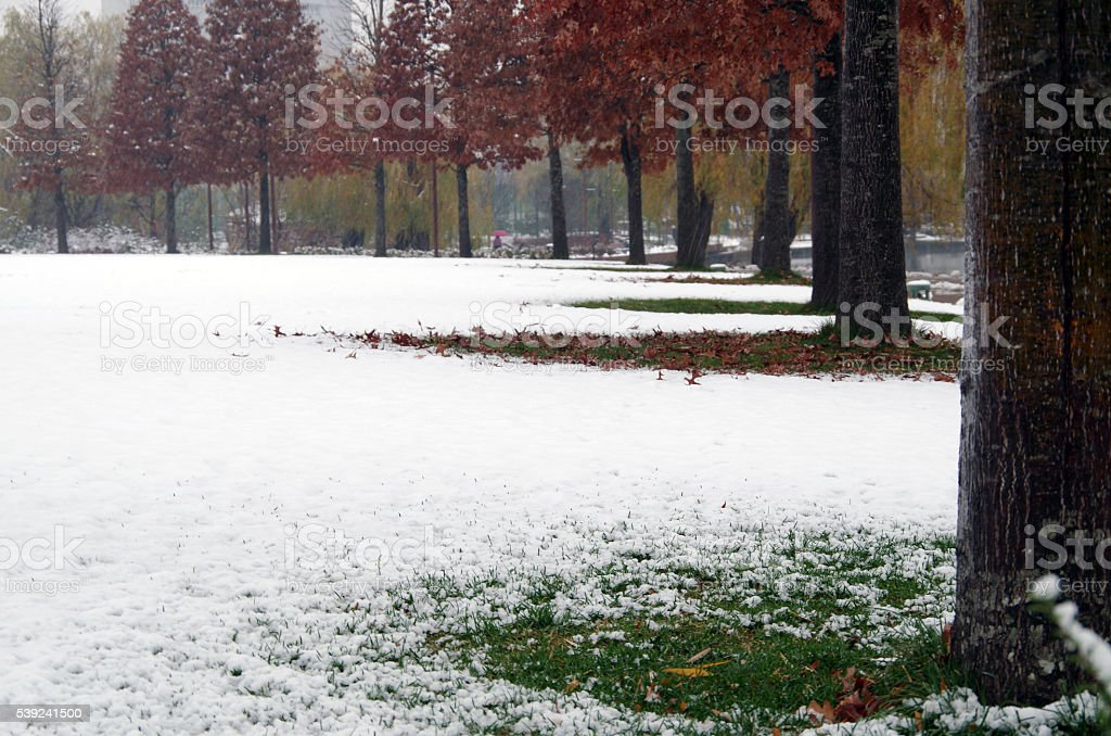 Winter Arrival royalty-free stock photo