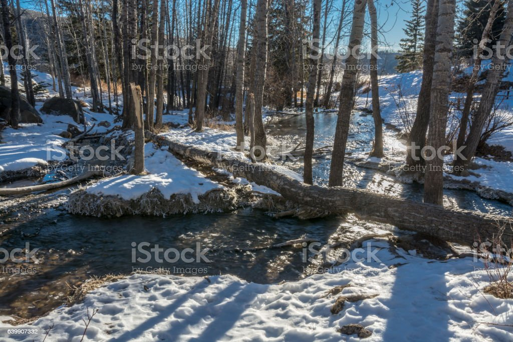 Winter Aspen Forest with Spring Water stock photo