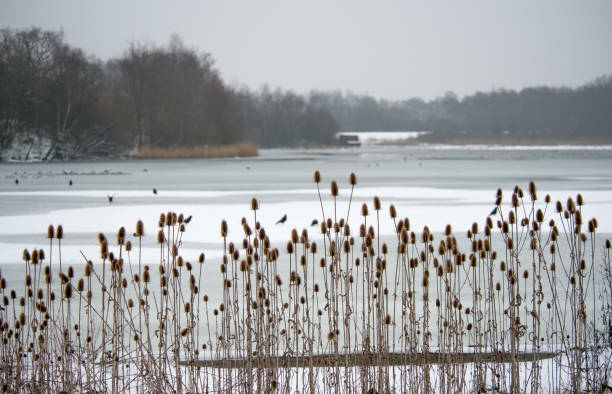 winter at england nature reserve - nature reserve stock photos and pictures