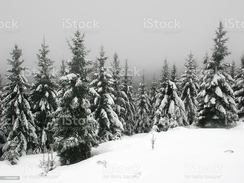 Winter at Mt. Brocken in the german Harz mountains royalty-free stock photo