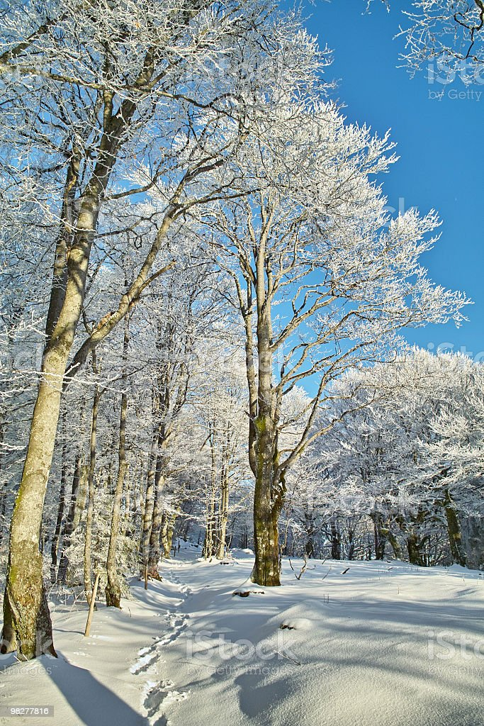 winter at Schauinsland Black Forest royalty-free stock photo