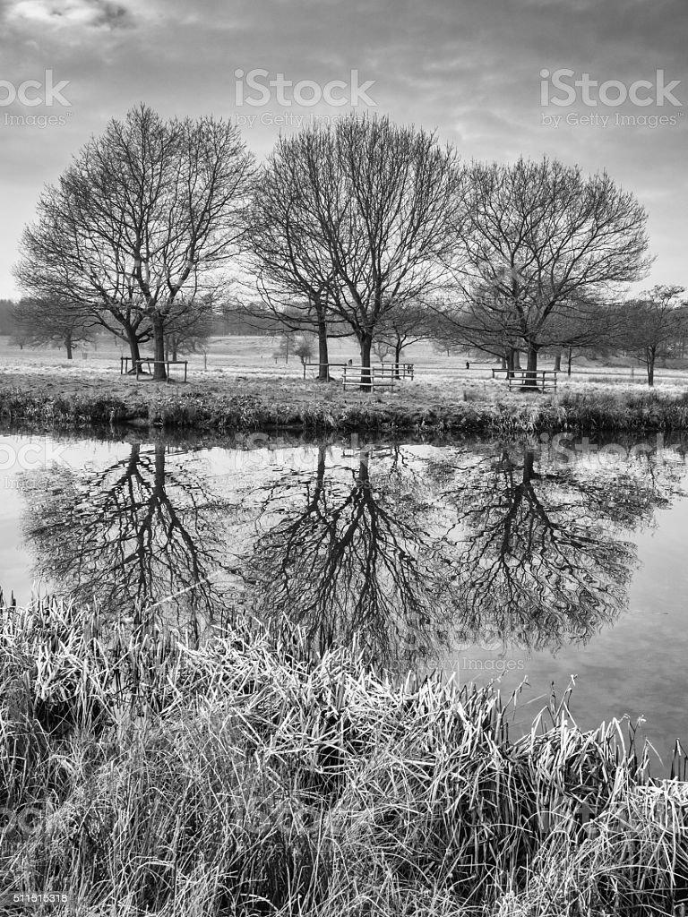 Winter at Tatton Park stock photo