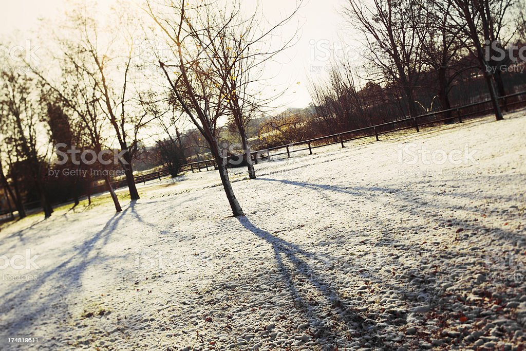 Winter at the park royalty-free stock photo