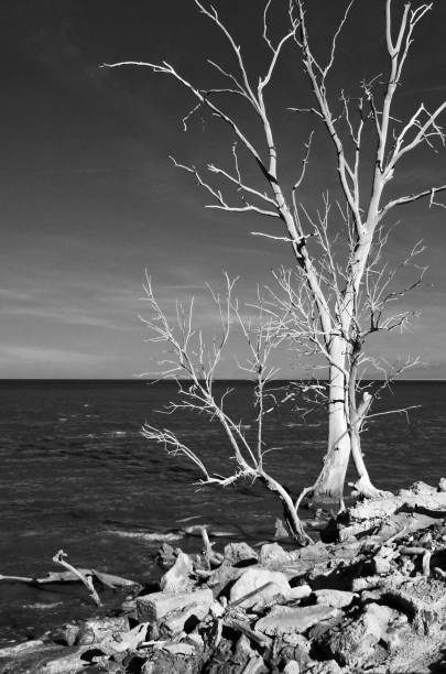 Winter at the Salton Sea stock photo