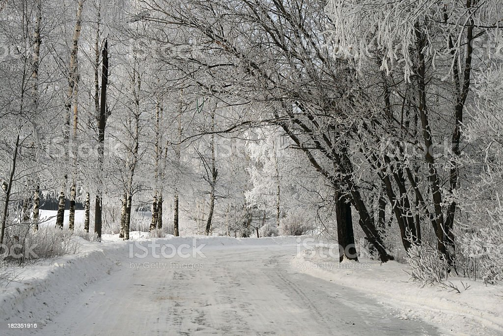 Winter avenue royalty-free stock photo