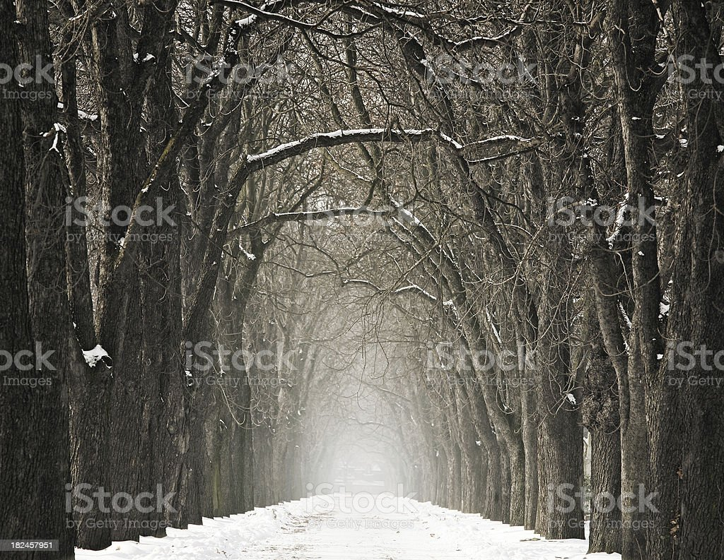 Winter Avenue royalty-free stock photo