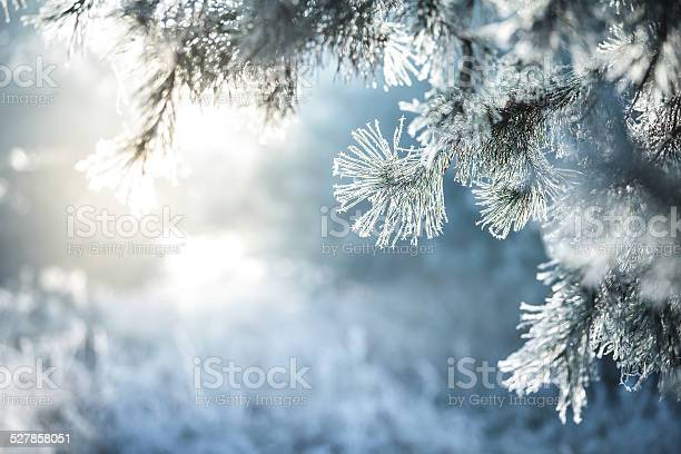Winter Background Frozen Christmas Tree And Blurred Snow Stock Photo - Download Image Now