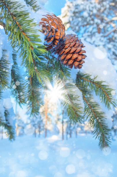 winter hintergrund - schneeflocke sonnenaufgang stock-fotos und bilder