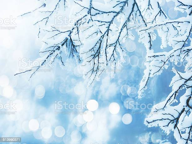 Photo of winter background