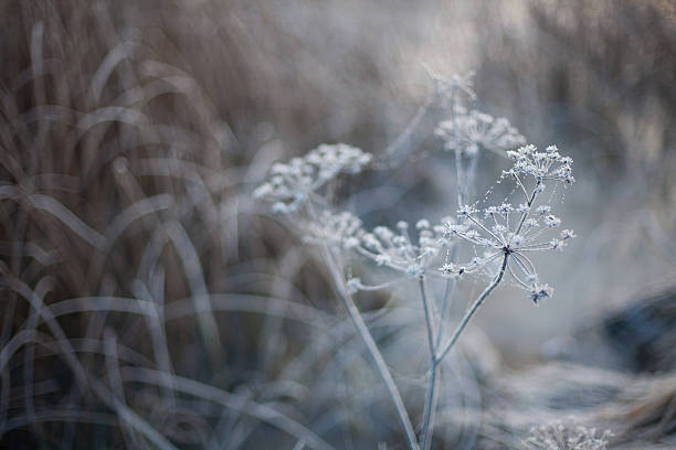 Winter background with neutral colors of a frozen plant – Foto