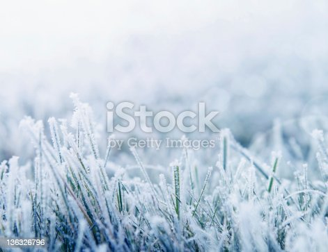 Morning frost on the grass toned blue