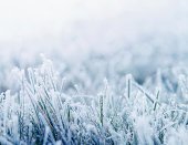 istock Winter background with snowy grass 136326796