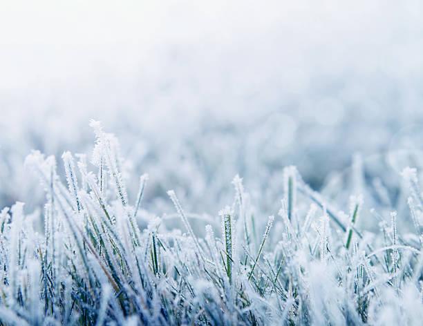winter hintergrund mit textfreiraum - laub winter stock-fotos und bilder