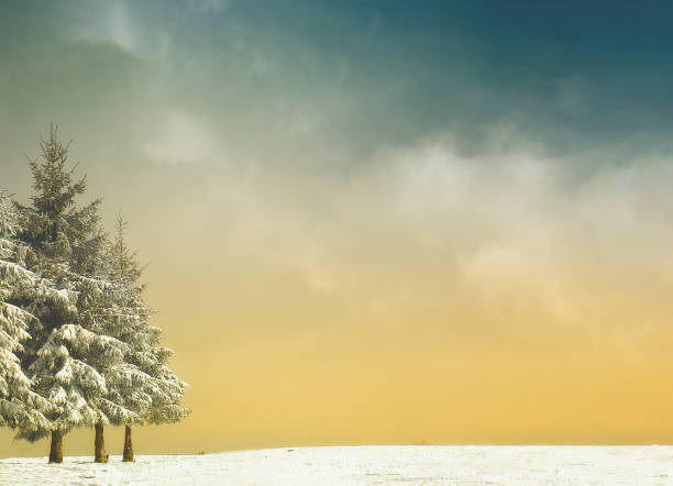 winter background with trees and snow and vintage filter effect - sepia stock photos and pictures