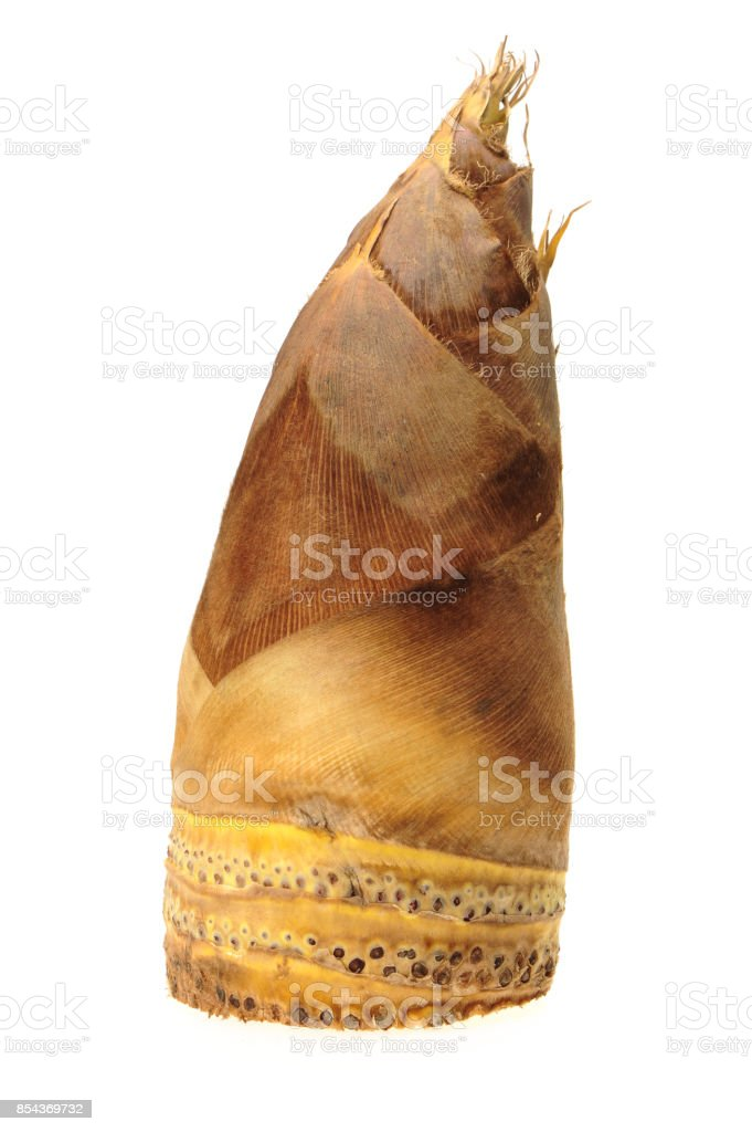 Winter bamboo shoot Isolated On White Background stock photo