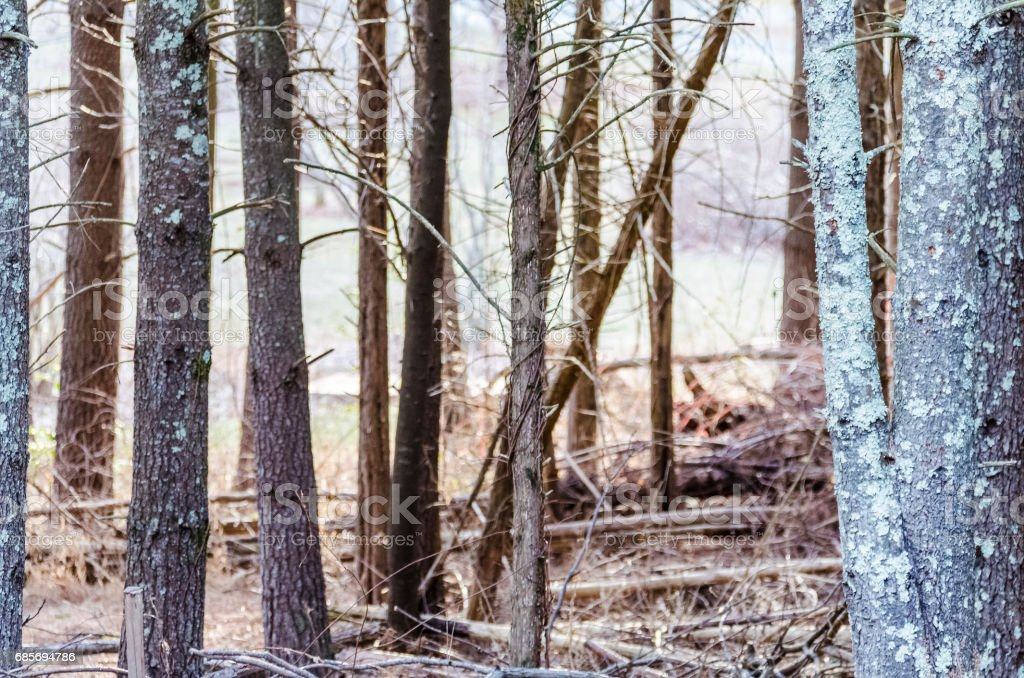 Winter bare forest with logs on ground stock photo