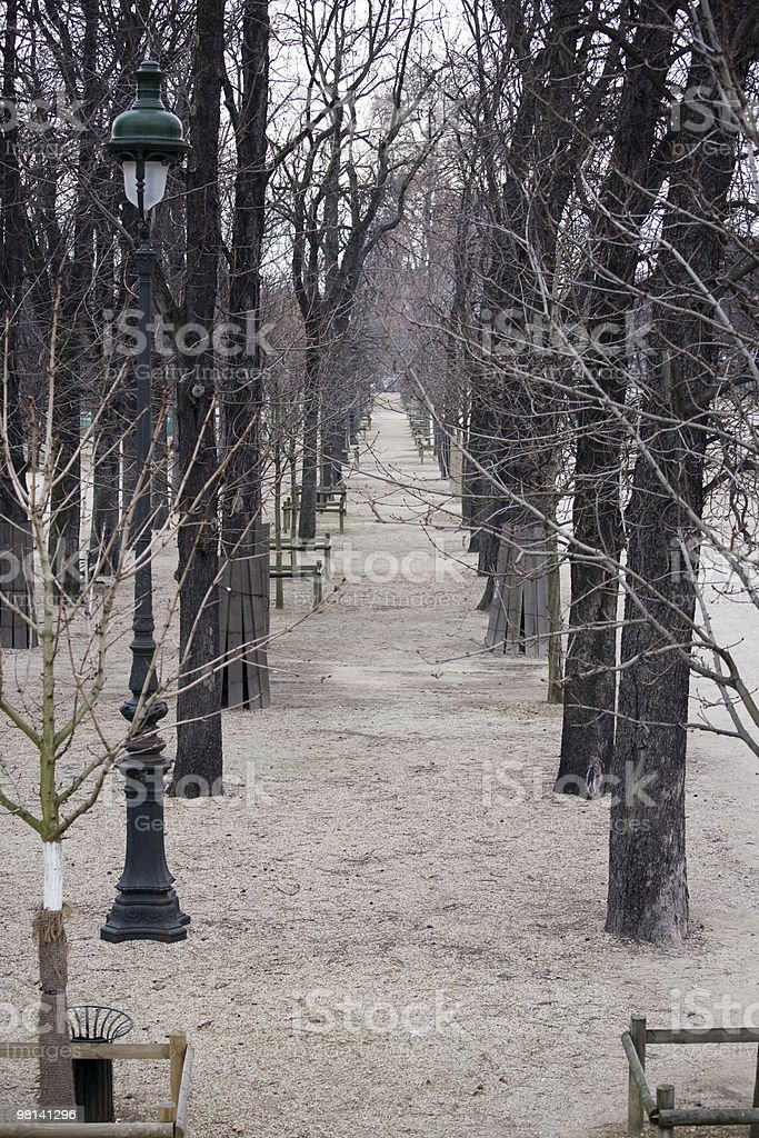 겨울맞이 메마른 나무를 튈르리 정원, 파리, 프랑스 royalty-free 스톡 사진