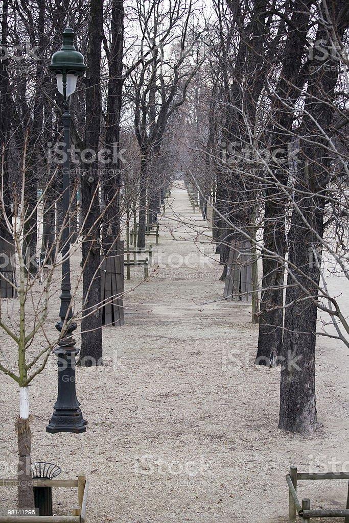 Winter barren trees in the Tuileries Garden, Paris, France royalty-free stock photo