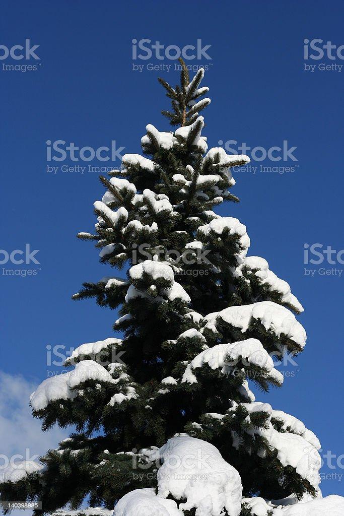 Winter beautyful tree royalty-free stock photo