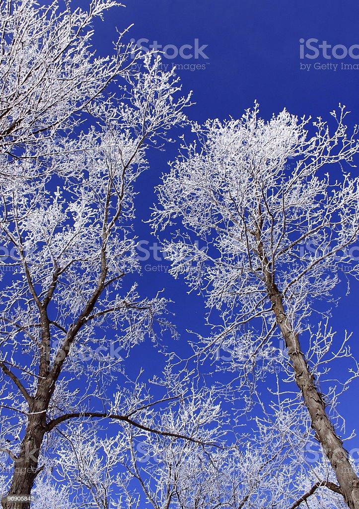 Winter Blue royalty-free stock photo